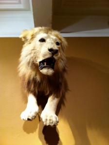 Lion at the Museum of Natural History