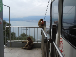 Apes waiting for us as we got off of the cable car