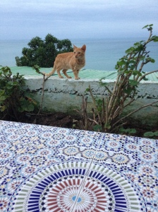 Views (to Spain) from Cafe Hafa. There were so many Moroccan kitties!