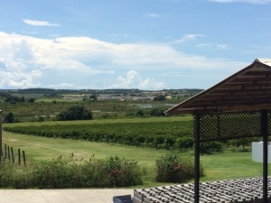 125 acres of vineyards