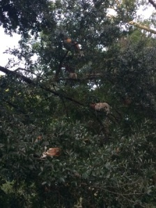 Random chickens were all over and in trees outside of YDE