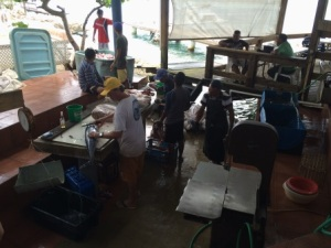 Fishermen prepping the fish