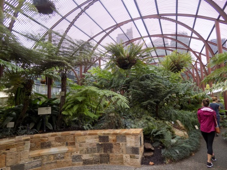 We learned a lot about ferns in the Botanical Gardens