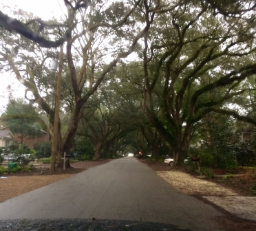 Canopy road in James Island