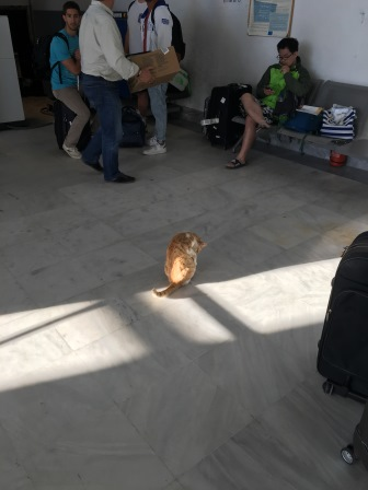 This Greek cat at the airport wanted to come back to Athens with us!