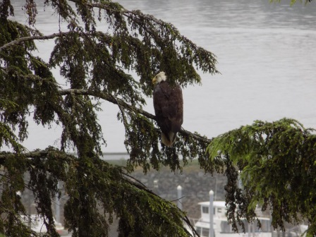 We spotted this bald eagle from one of the trails