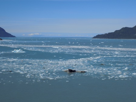 The ice field around Hubbard Glacier. Thank goodness we had a good captain!